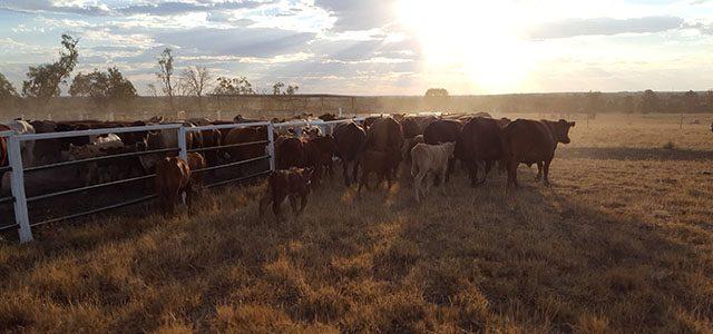 Travailler 3 mois en ferme bovine