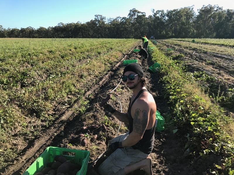 10 conseils pour faire ses 88 jours de ferme en australie