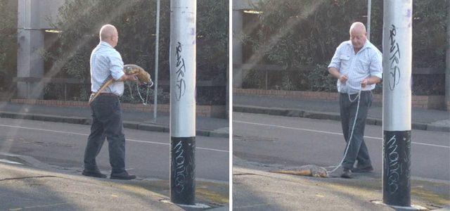Un australien promène un crocodile dans les rues de Melbourne