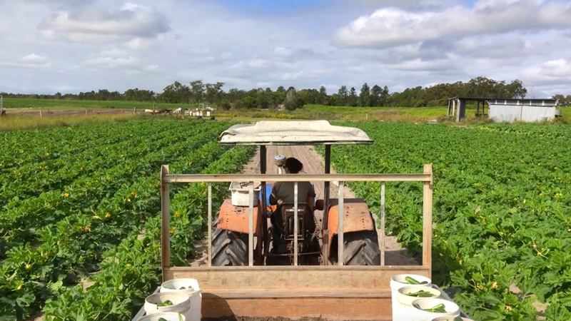 fruit picking fermes australie