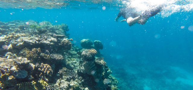 Plongée sur la Grande Barrière de Corail avec Reef Experience