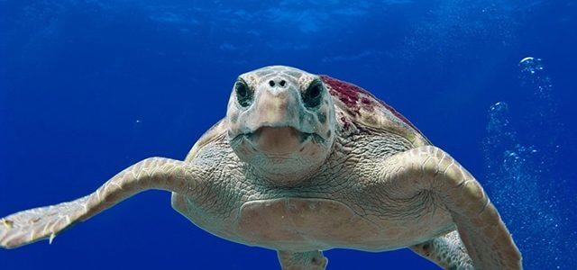 Grande Barrière de Corail : Où observer les Great 8 ?