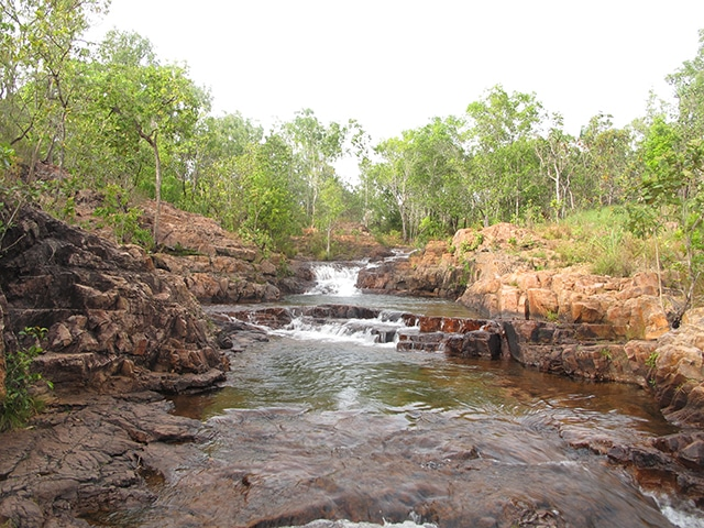 endroits immanquables litchfield national park nord centre australie