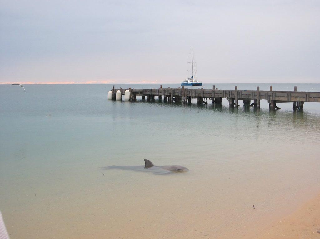 Coral Coast 4