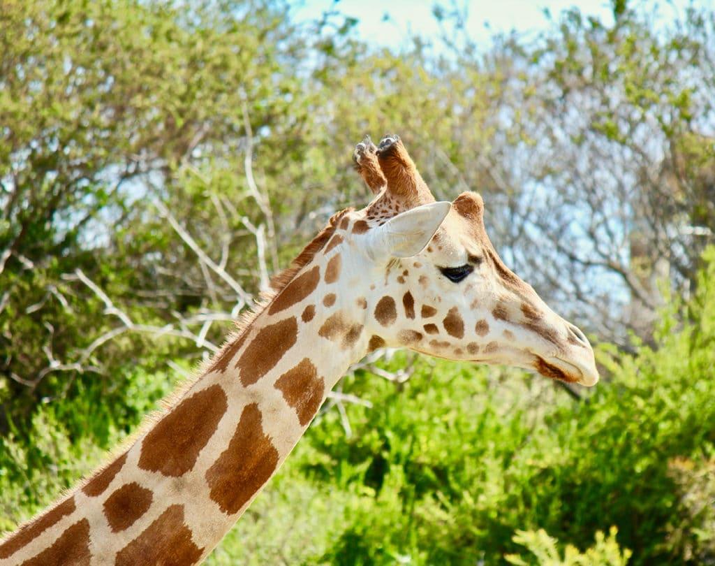 aktivitäten melbourne zoo