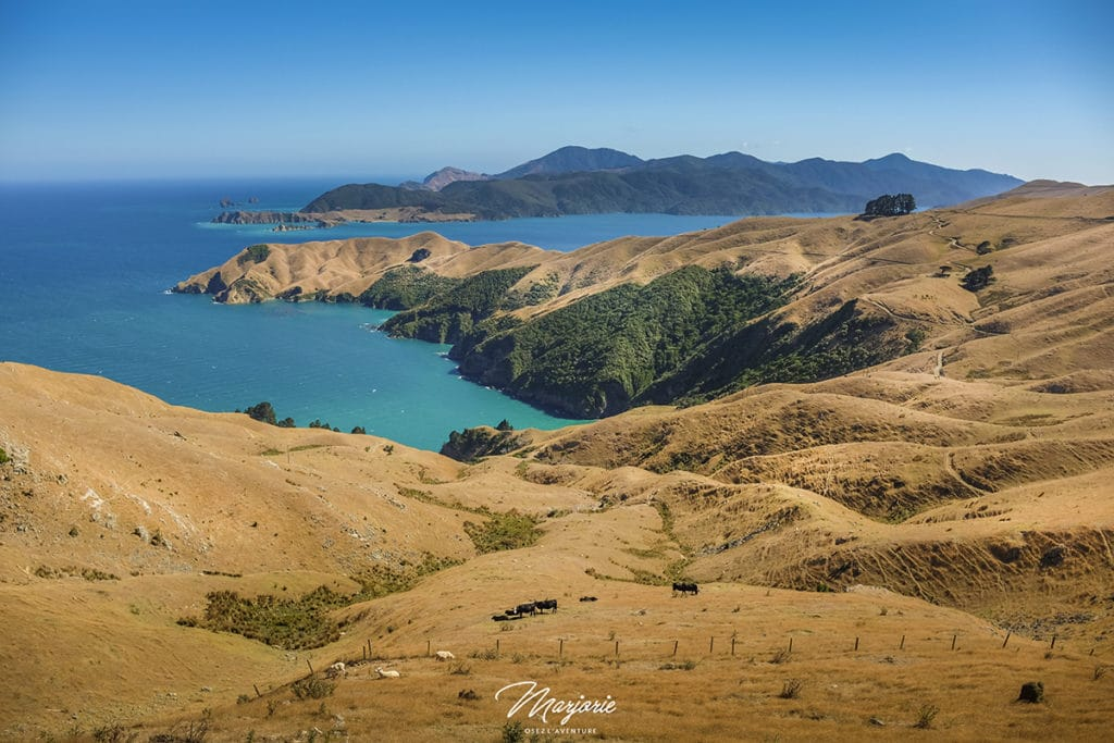 French Pass South island new Zealand