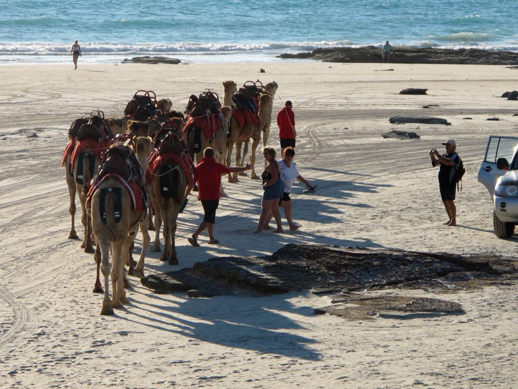 visit broome camel rides